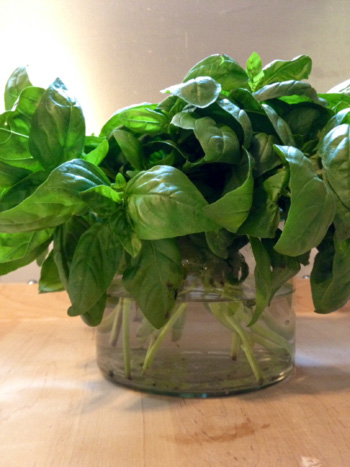 Basil Bouquet