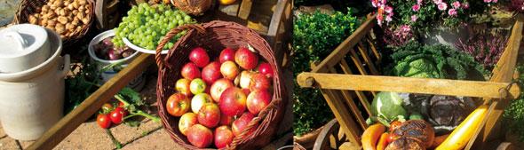 Schmitt Harvest