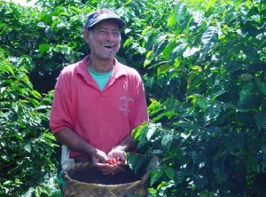 Don Miguel picking coffee berries